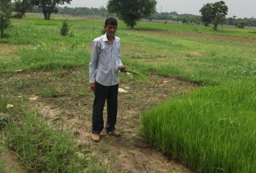 जम्मू के सांबा में हुई देश की सबसे कम वर्षा, किसानों को बड़ा धक्का