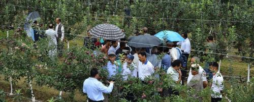 Can high density plantations save Himachal's apple economy?