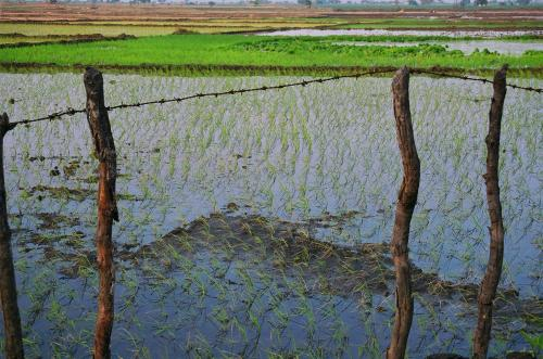 दुनिया भर में तीन अरब से अधिक लोग पानी की गंभीर कमी का सामना कर रहे हैं : एफएओ