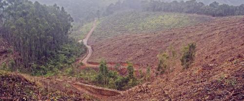 Weak governance escalating deforestation in Tanzania: FAO report