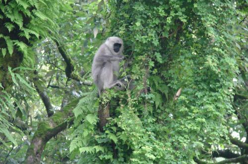 जंगलों में अतिक्रमण का सर्वे करने में एफएसआई को लग सकते हैं 16 साल