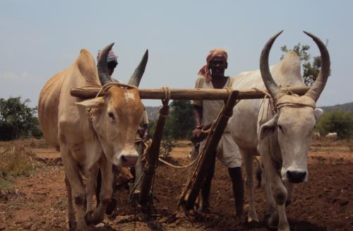 किसान को देने होंगे गैर कृषि कार्यों के मौके, तब बढ़ेगी आय