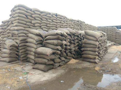 गोदामों में जमा है बफर स्टॉक से दोगुना ज्यादा अनाज, खराब हुआ 1150 टन