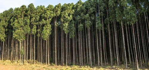 ICFRE-ICIMOD's REDD+ Himalayan programme extended till 2020