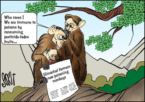 Himachal farmers now poisoning monkeys