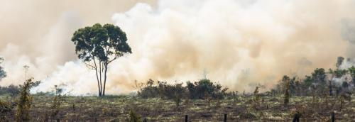 What an Indian environmentalist in Brazil has to say on the Amazon fires