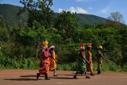 जंगल बचाने वाले देशी समुदायों पर बेदखली का संकट: रिपोर्ट