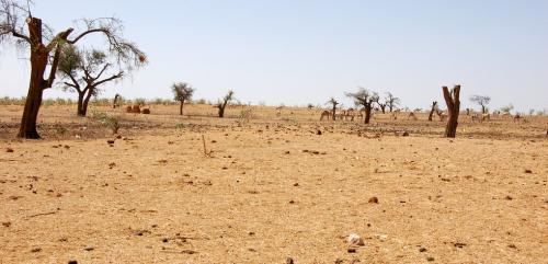 $6.4 billion spent to combat desertification in last 2 years: Report