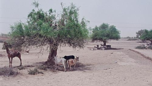 90 years of desertification
