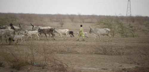 Desertification in India: How a faulty government scheme degraded Gujarat's Banni grasslands