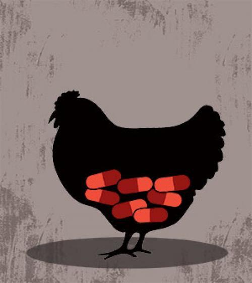 चिकन में कोलिस्टिन पर प्रतिबंध का विरोध कर रही हैं बड़ी कंपनियां