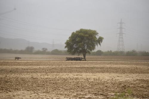 UNCCD CoP 14: 'Public-private partnership can help restore degraded lands'