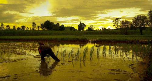 Invest $1.7 trillion in nature-based solutions to adapt to climate change: UNCCD report