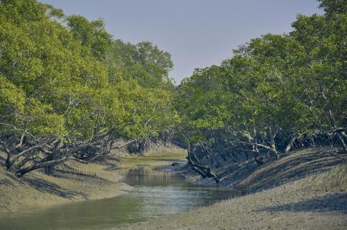 How bio-restoration is helping revive degraded mangroves in Sunderbans