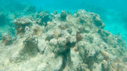 Rising sea temperatures pose a threat to coral reefs: Study