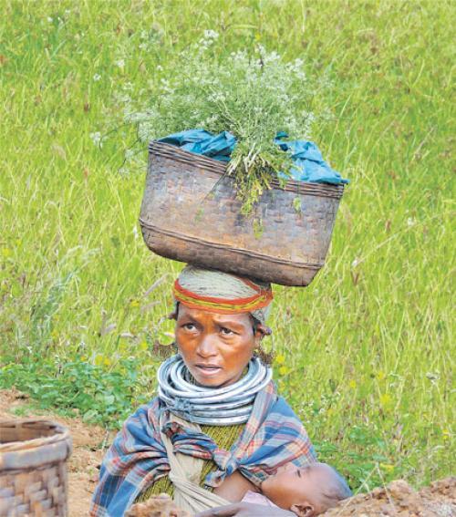 दुनिया भर में दी जाती है बोंडा घाटी की खेती की मिसाल, जानें क्या है वजह