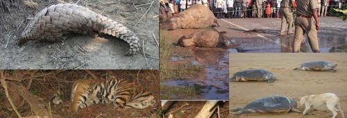 India Wildlife Week: Odisha's report card has hardly anything to show