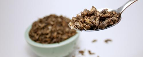 Will insects become an integral part of our diet again?