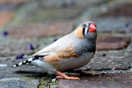 ट्रैफिक के शोर से पक्षी छोड़ रहे हैं गाना-चहचहाना, प्रजनन पर भी पड़ा असर: अध्ययन