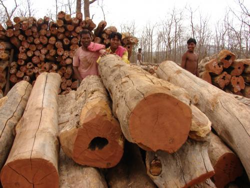 2017 में देश भर में हुए 42143 पर्यावरणीय अपराध, तमिलनाडु शीर्ष पर
