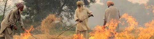 Farmers in Punjab are burning stubble as an act of rebellion
