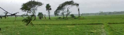 Bulbul damages crops, houses, electricity and water connections in Odisha