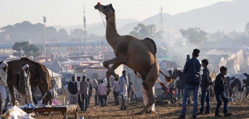 Will India's camels amble forever into the sunset?