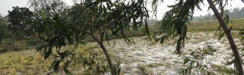 Bulbul 'more dangerous than Aila': Affected people