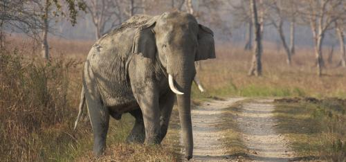 Technical committee formed to create National Elephant Action Plan