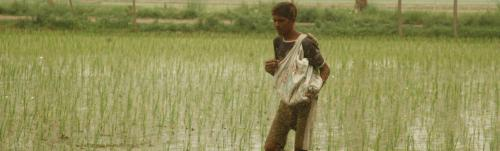 Severe urea shortage leads to row between Madhya Pradesh, Centre