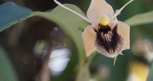 उत्तराखंड में कैंपा फंड से सहेजी जाएंगी ऑर्किड की प्रजातियां