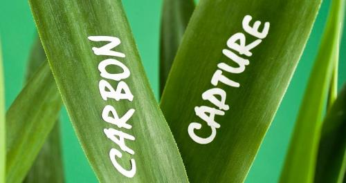 Climate Emergency CoP 25: Carbon capture essential to our future