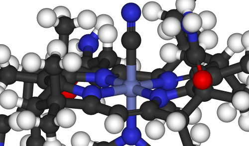 विटामिन-बी12 के बेहतर उपयोग में मददगार हो सकता है पादप अर्क