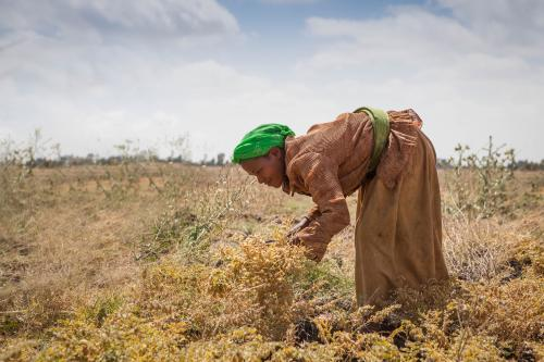 Can African smallholders farm themselves out of poverty?