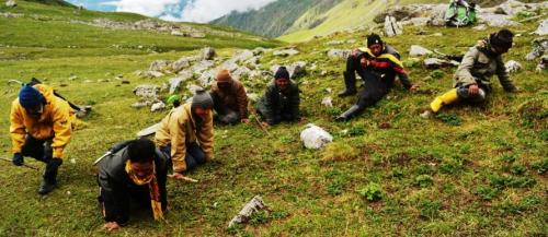 Himalayan 'gold rush': Growing livelihood reliance on lucrative and vulnerable trade