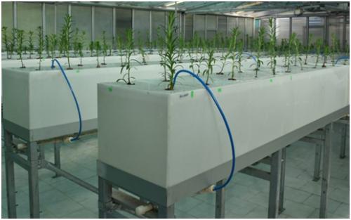 बिना मिट्टी के पौधों की खेती करना सिखाती है यह तकनीक
