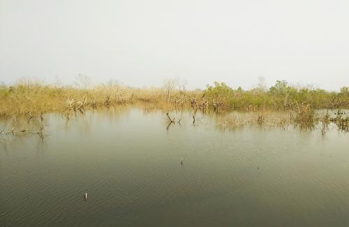 सुंदरवन में क्यों घट रहा मैंग्रोव का जंगल?