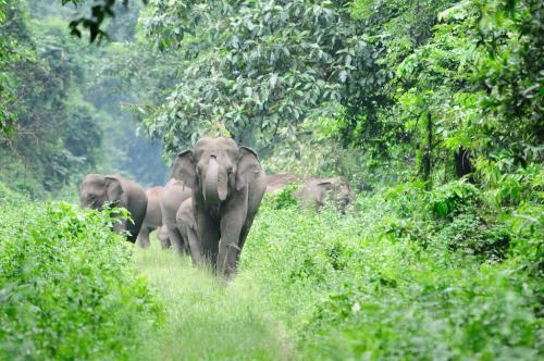 घातक है प्राकृतिक जंगल काटना, करते हैं कृत्रिम जंगल से 23 फीसदी अधिक कार्बन कैप्चर