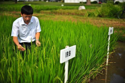 क्या जादुई चावल के बारे में जानते हैं आप?