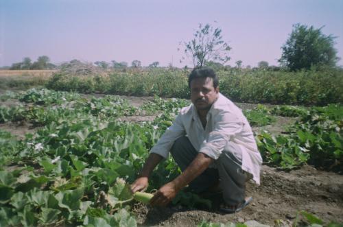 बजट 2020-21: किसानों की आय बढ़ाने के लिए सरकार से अधिक खर्चे की उम्मीद कर रहे विशेषज्ञ
