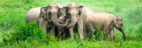New MoEF guidelines for elephant deaths from anthrax