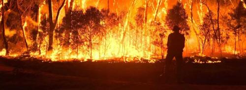 Six million hectares of threatened species habitat up in smoke
