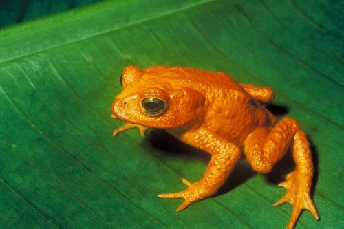 कैसे मान लें कि विलुप्त हो रही हैं प्रजातियां, वैज्ञानिक ढूंढ़ रहे फार्मूला