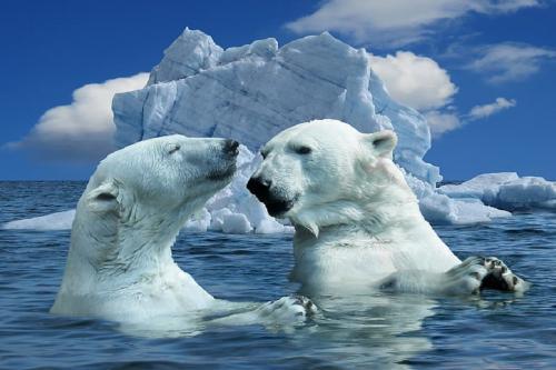 एक शोध में सामने आया आर्कटिक के तापमान बढ़ने का कारण