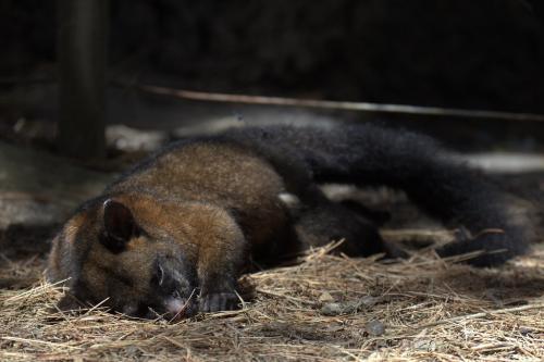 जीते जी ही नहीं मरने के बाद भी पर्यावरण के लिए उपयोगी होते हैं जानवर