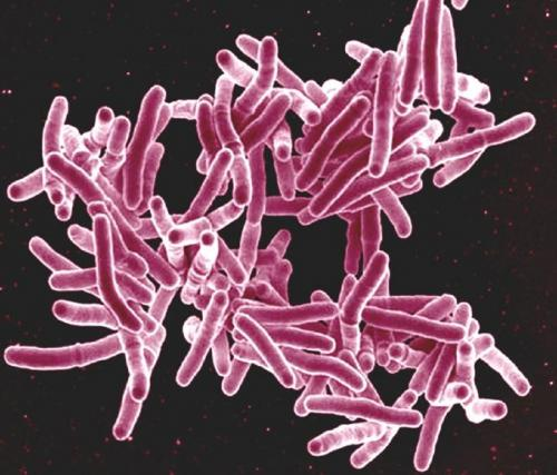Scientists find a new way to fight TB