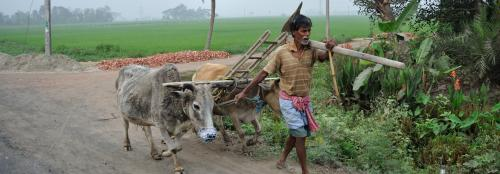 Economic Survey 2019-20: Agriculture growth stagnant in last 6 years