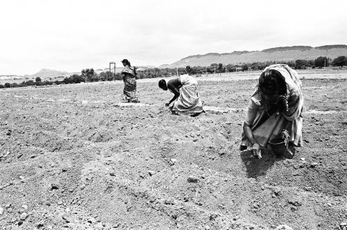 राजस्थान बजटः कृषि के लिए 11,182 करोड़ आवंटित, नहीं हुई बड़ी घोषणाएं