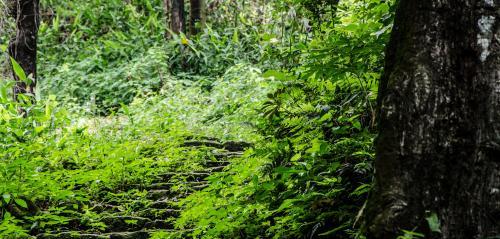 Economic Survey 2019-20: Afforestation under GIM over 126,916 ha