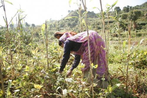 बजट 2020-21: बिना बजटीय सहायता कैसे होगी जीरो बजट खेती?